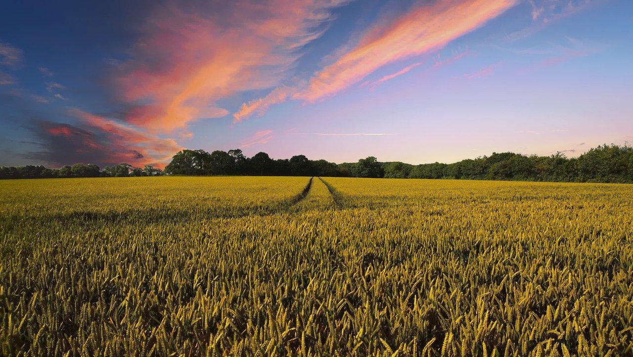 5Gによる農林水産分野への経済効果は4,268億円